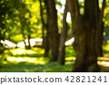 Defocused image of a forest with sunshine and green leaves. Abstract blured background 42821241