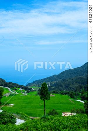Summer rocky ryuu rice terrace 42824024
