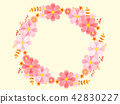 cosmos, cosmea, flower 42830227