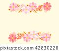 cosmos, cosmea, flower 42830228