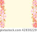 cosmos, cosmea, flower 42830229