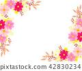cosmos, cosmea, flower 42830234
