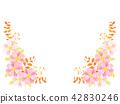 cosmos, cosmea, flower 42830246