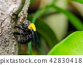 Carpenter bee in the nature 42830418