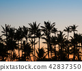 palm tree, silhouette, silhouetted 42837350
