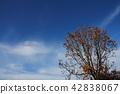 ฤดูใบไม้ร่วง,ปีนผา,โตเกียว 42838067