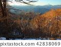 ฤดูใบไม้ร่วง,ปีนผา,โตเกียว 42838069