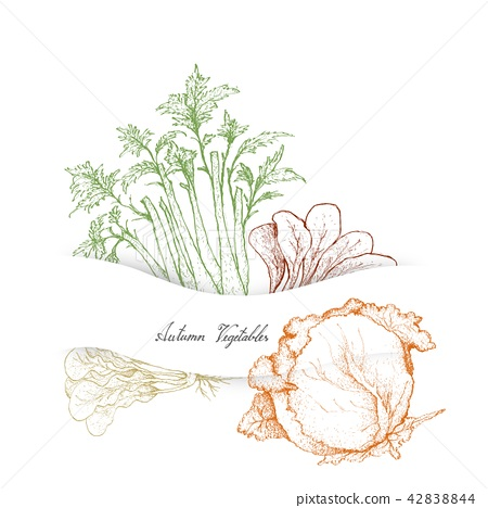 Autumn Vegetables, Celery and Cabbages 42838844