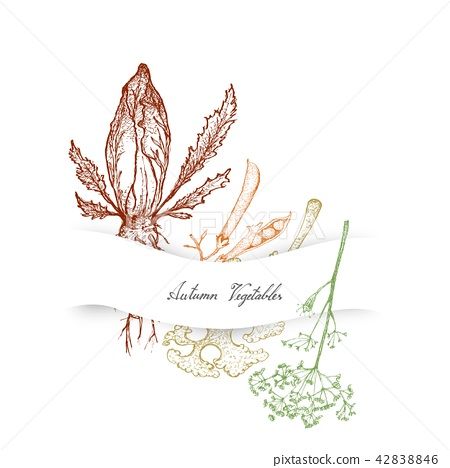 Autumn Vegetables of Chicory, Dill and Kale 42838846