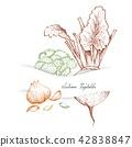甘藍 包菜 椰菜 42838847
