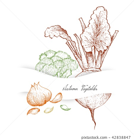 Autumn Vegetables of Broccoli, Beetroot and Garlic 42838847