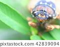 매미, 곤충, 벌레 42839094