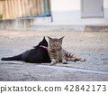 고양이, 단짝, 사이 좋음 42842173