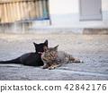 2 마리의 고양이 42842176
