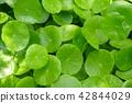 植物 植物學 植物的 42844029