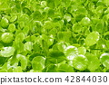 植物 植物學 植物的 42844030