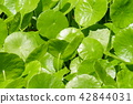 植物 植物學 植物的 42844031