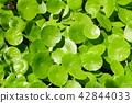 植物 植物學 植物的 42844033