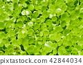 植物 植物學 植物的 42844034