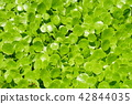 植物 植物學 植物的 42844035