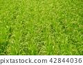 植物 植物學 植物的 42844036