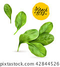 Realistic Herb Spinach 42844526
