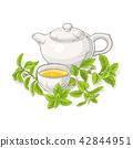 stevia, rebaudiana, sweetleaf 42844951
