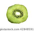 Slice of fresh kiwi fruit. Watercolor 42848591