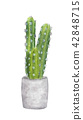 Watercolor painting of cactus in pot 42848715