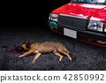 Car hit the dog death on the road pets accident 42850992