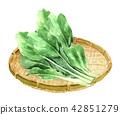 日本芥末菠菜漏勺 42851279