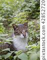 草叢中的貓 42852720