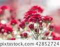 紅花 42852724
