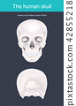 The human skull is the bony structure 42855218