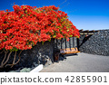Peaceful bench under red blossoms bush, Lanzarote 42855901