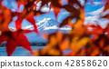Mount Fuji in Autumn Color, Japan 42858620