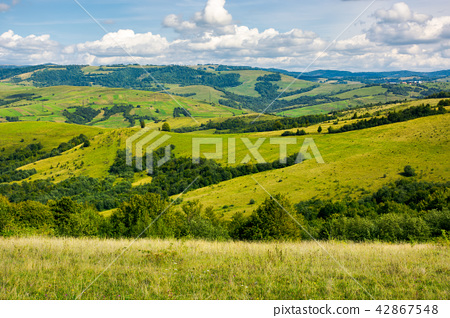 grassy meadows and forested hill 42867548