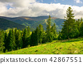 forest, hill, mountain 42867551