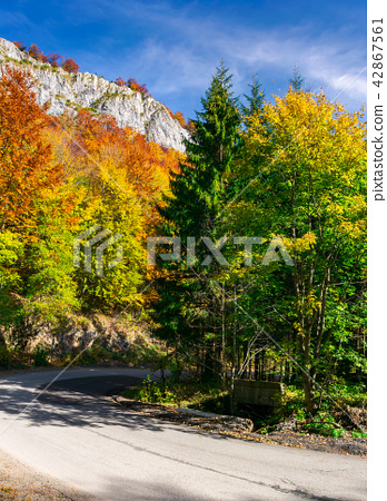 country road through forest in autumn 42867561