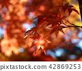 단풍, 단풍나무, 단풍놀이 42869253