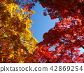 red leafe, autumn leaves, autumnal tints 42869254