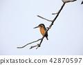 wild, bird, birds 42870597