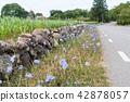Beautiful roadside with blue flowers 42878057