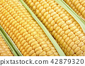 close-up view of fresh corn 42879320