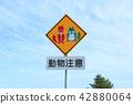 홋카이도 재미있는 동물주의 표지판 붉은 여우와 초록의 너구리 42880064