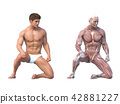 肌肉發達 肌肉 雙位 42881227