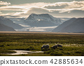 sheep in a field and Vatnajokull glacier Iceland 42885634