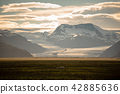 sheep in a field and Vatnajokull glacier Iceland 42885636