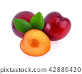 red cherry plum with green leaves on white  42886420