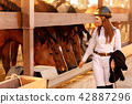rider woman in helmet with whip near horses 42887296